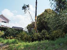 太宰府市老人ホーム コンテナ塗装工事 大木伐採施工中
