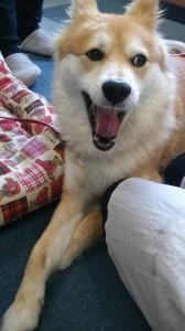 筑紫野市 事務所 愛犬ペコ