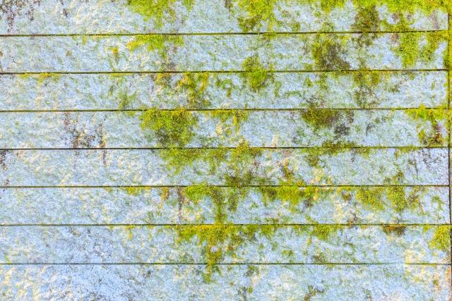 写真:コケの生えた外壁